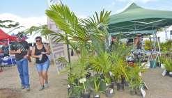Au cœur de la Fête du palmier