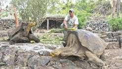 Sauver les tortues des Galapagos