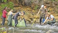 Des fragments d'ADN pour  pister les poissons d'eau douce