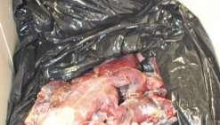 7,2 kilos de tortue  et 100 litres de komo saisis par les douanes