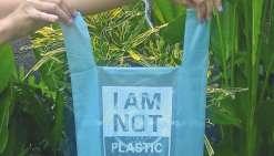 Le manioc, une solution pour remplacer le plastique