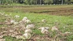 La Nouvelle-Calédonie, reine du gaspillage alimentaire