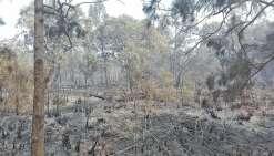 Trois jours de combat contre le feu à Koumac