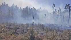 Plus de 120 hectares brûlés à l'île des Pins