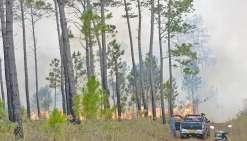 Incendies en série sur le Caillou