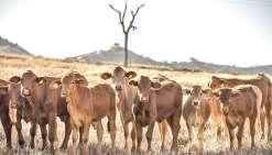 Vers une fin de la sécheresse sur tout le pays