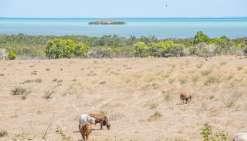« L'élevage bovin représente 96 % de l'espace agricole occupé, précise Fabien Escot, de la Davar. C'est un secteur dans lequel on était plus qu'autosuffisant, et qui ne couvre plus que 60 % de la demande. »