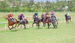 C'était la course que les passionnés -attendaient tous, samedi. Huit chevaux se sont affrontés sur les 1 400 mètres  de la La Foa Classic, dernière course de la journée. C'est finalement Precocious (gauche) qui s'est imposée.
