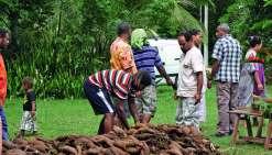 Le comité milite pour remettre l'igname au cœur des échanges coutumiers et de l'alimentation. Photo d'archives