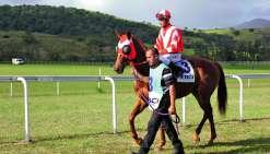 Prattriver, monté par Julien Magniez, s'est imposé samedi dans le Grand Prix de la Province Sud des 3 ans. Photo Titouan Moal