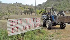 331 bêtes tuées : l'éleveur  de Sarraméa crie sa détresse