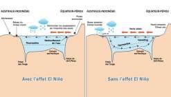 El Niño, c'est du concret