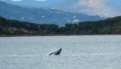 Des baleines au balcon
