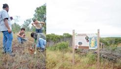 Une nouvelle forêt sèche va sortir de terre à Pindaï