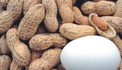 L'allergie alimentaire, mal du siècle