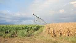 Les agriculteurs ont anticipé la période de sécheresse