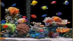 Colocataires en aquarium