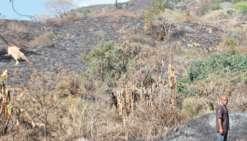 Eau, agriculture, érosion : l'autre coût des incendies
