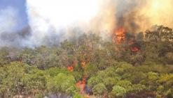 1 500 hectares ravagés par un incendie