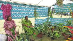 Canafloralies sort ses plus belles plantes