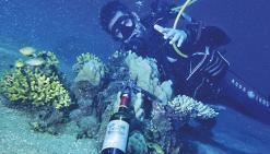 Une étude inédite sur l'alcool et la plongée