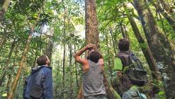 Des pistes pour conserver les forêts humides du Nord