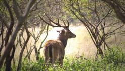 Les chasseurs ont carte blanche en province Sud