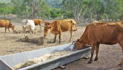Autonomie alimentaire : le déclin va-t-il s'enrayer ?