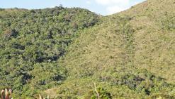 Maquis et forêts « reliques » du Sud : un destin commun ?