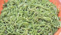 Le remu vine, or vert de Tubuai, a de l'avenir