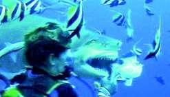 Nourrir les requins, une activité bientôt interdite en Polynésie
