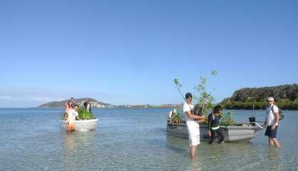 200 arbres plantés sur l'îlot Sainte-Marie par Caledoclean