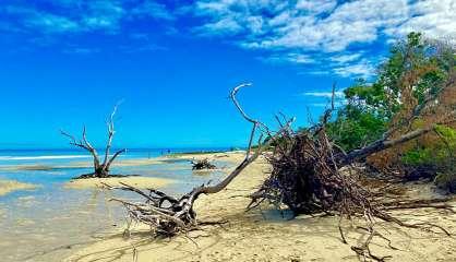 [VIDÉO] Comment sauver les forêts de nos îlots?