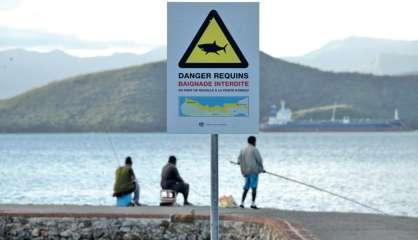 Alerte au requin en baie de Sainte-Marie