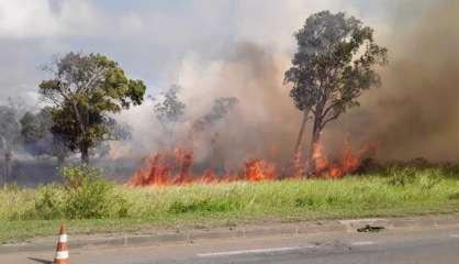 Trente hectares partis en fumée à Ouégoa