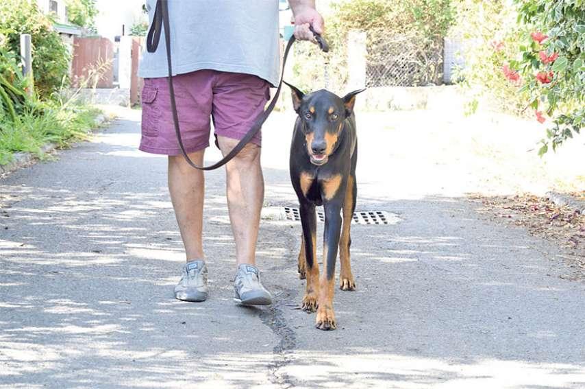 Les promenades de votre animal doivent être brèves et se faire aux alentours du domicile. Photo L.Courtot