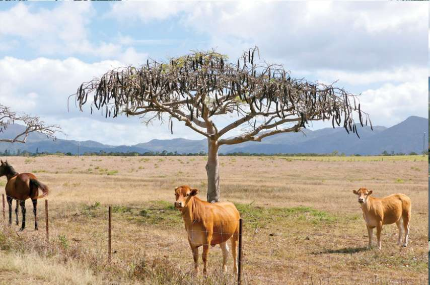 Le plan sécheresse est une aide à l'achat d'aliments ciblés pour le bétail. Photo Archives Anthony Tejero/ LNC