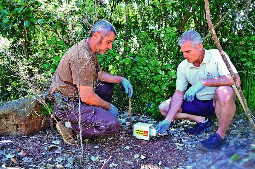 Les agents du parc de la rivière Bleue posent, tous les deux mois, des appâts toxiques dans un tunnel à l'abri de la pluie. Le poison est enlevé au bout de cinq à huit jours s'il n'a pas été consommé.Photos : A.T.
