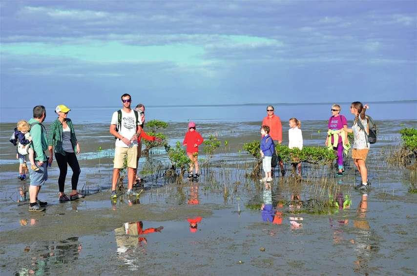 Ils étaient près d'une quinzaine d'enfants et d'adultes à faire ce lundi matin une balade à la découverte de la mangrove. Amandine Aiglin, présidente de l'association Nixûmwâk, les a guidés pour leur apprendre à connaître ce milieu et à découvrir la flore