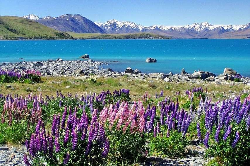 Les Kiwis considèrent désormais la Terre du Milieu comme faisant partie de leur culture. Photo DR