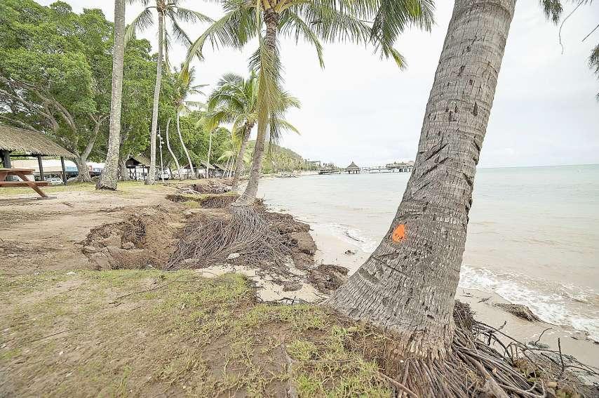 Le long de la plage, des arbres ont été marqués. « Ceux qui risquent de tomber seront tronçonnés », indique Philippe Jusiak. Photos Cyril Terrien