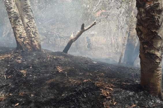 Feu de végétation à Montravel : la police nationale interpelle l'incendiaire présumée