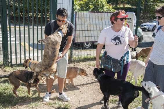 Nouméa : adopter un chien ce matin, c'est possible