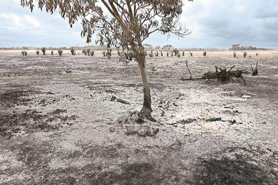 Les agriculteurs australiens vont tenter de panser leurs plaies