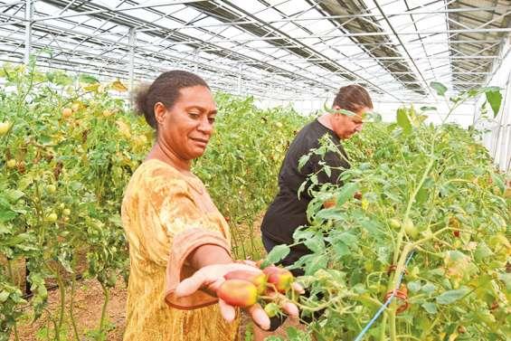 La première ferme solaire… et maraîchère du Caillou