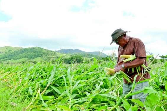 466 agriculteurs à indemniser après les passages de Fehi et de Gita