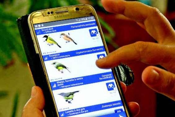 OrnitO : l'application dédiée aux oiseaux du Pacifique
