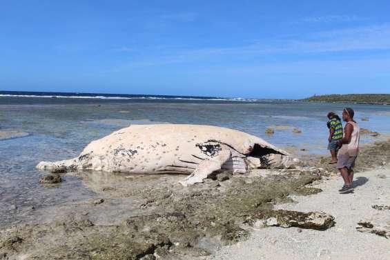 Une baleine échouée à Ouvéa