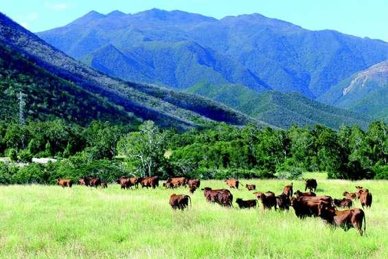 L'élevage bovin veut regagner sa place