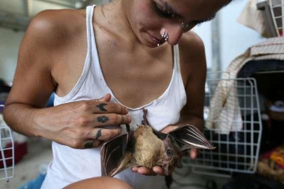 En Israël, une Batwoman au secours des chauves-souris